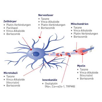 Die F. A. G.®–Wirkstoffkombination trägt dazu bei, dass die Funktionen der Nervenzellmembran wiederhergestellt werden bzw. erhalten bleiben